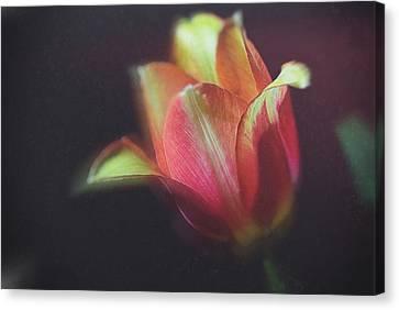 Canvas Print - Flower-3 by Okan YILMAZ