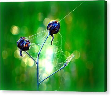 Canvas Print featuring the photograph Flower 3 Spiderweb  by David Mckinney
