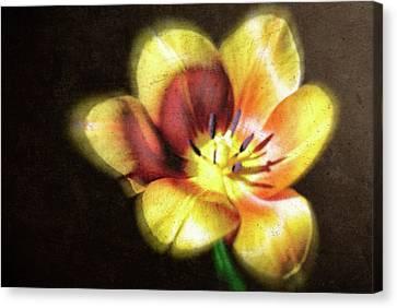 Canvas Print - Flower-4 by Okan YILMAZ