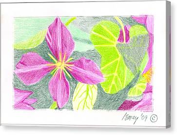 Canvas Print featuring the drawing Flower 5 - Purple Clematis by Rod Ismay