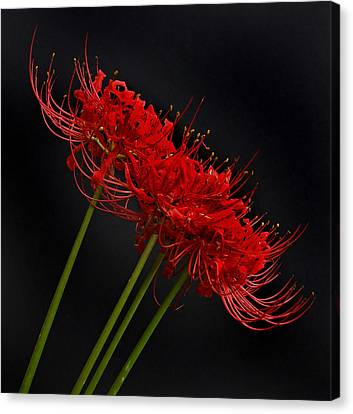 Flower 8-6 Canvas Print