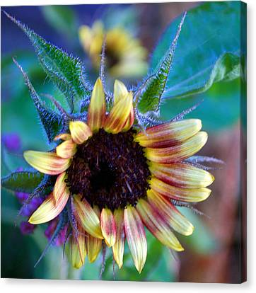Flower 8-8 Canvas Print