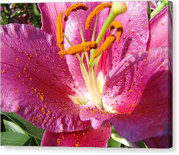 Flower Art Prints Pink Orange Lily Flower Giclee Baslee Troutman Canvas Print by Baslee Troutman