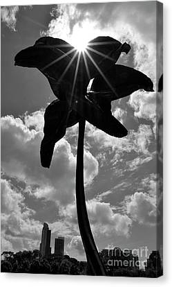 Canvas Print featuring the photograph Flower Art by Zawhaus Photography