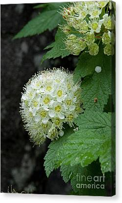 Canvas Print featuring the photograph Flower Ball by Rod Wiens