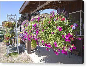 Flower Basket And Racks Displays Outside A Store. Canvas Print by Gino Rigucci