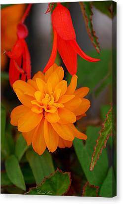 Canvas Print featuring the photograph Flower by Bernd Hau