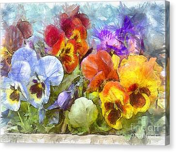 Flower Box Full Of Pansy Pencil Canvas Print by Edward Fielding