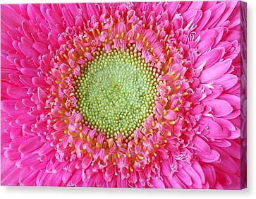 Flower Closeup Canvas Print by Deepak Pawar