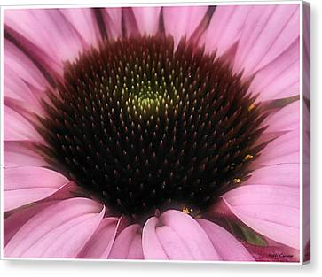 Flower Closeup Canvas Print by Mikki Cucuzzo