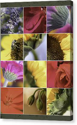 Flower Dozen Canvas Print by Janet Fikar