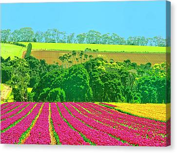 Flower Farm And Hills Canvas Print by Dominic Piperata
