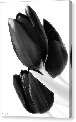 Flower Fashion Canvas Print by Wim Lanclus