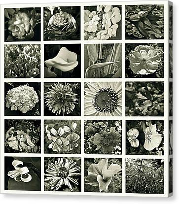 Flower Favorites Bw Canvas Print by Gwyn Newcombe