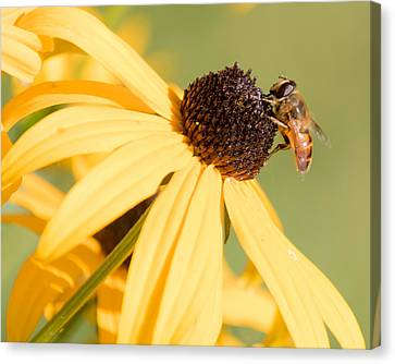 Flower Fly Canvas Print