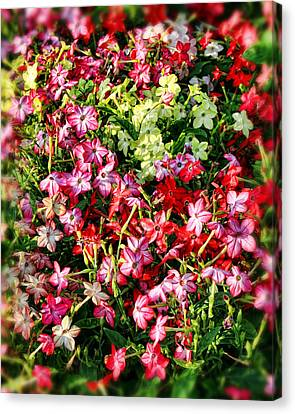 Flower Garden 1 Canvas Print