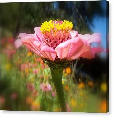 Flower Garden Canvas Print by Dottie Dees