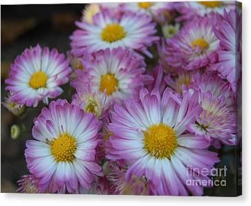 Flower Garden Canvas Print by Garnett  Jaeger