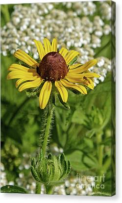 Canvas Print - Flower Garden by Natural Focal Point Photography