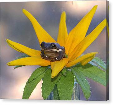 Flower Hopping Canvas Print by Debbie May