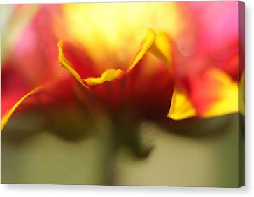 Flower Impressions II Canvas Print