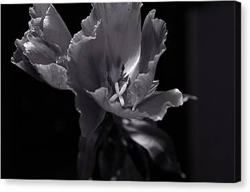 Flower In Monotone Canvas Print by Sheryl Thomas