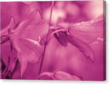 Flower In Pink Canvas Print by Tommytechno Sweden