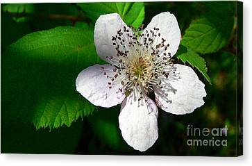 Canvas Print featuring the photograph Flower In Shadow by Larry Keahey