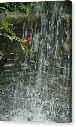 Flower In The Falls Canvas Print by Kicking Bear  Productions