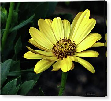 Flower In Yellow Canvas Print by Mikki Cucuzzo