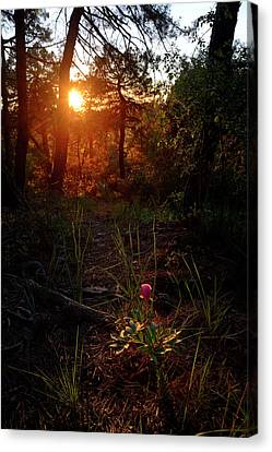 Exterior Canvas Print - Flower Into The Woods Lonely Peony by Guido Montanes Castillo
