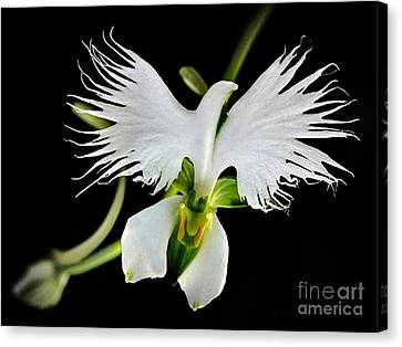 Flower Oddities - Flying White Bird Flower Canvas Print