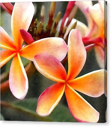 Thailand Canvas Print - Flower Of Bali by Stacey Chiew