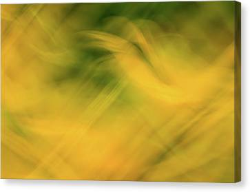 Flower Of Fire 4 Canvas Print