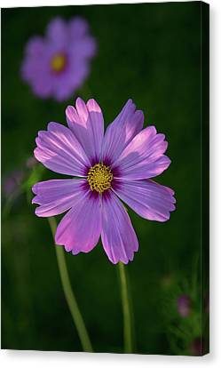 Canvas Print featuring the photograph Flower Of Love by Dale Kincaid