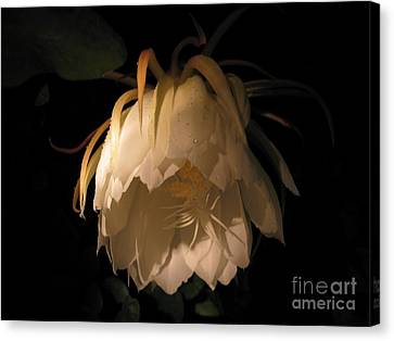 Flower Of The Night 02 Canvas Print by Andrea Jean