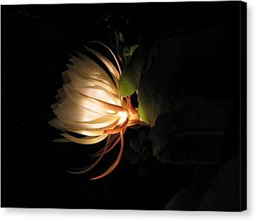 Flower Of The Night 03 Canvas Print by Andrea Jean