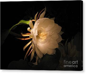 Flower Of The Night 04 Canvas Print by Andrea Jean