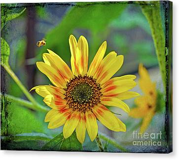 Canvas Print featuring the photograph Flower Of The Sun by Kerri Farley
