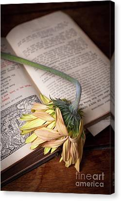 Flower On Old Bible Canvas Print by Edward Fielding