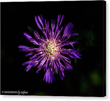 Flower Or Firework Canvas Print