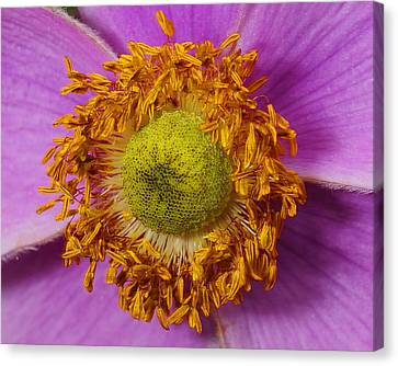Flower Orbit Canvas Print