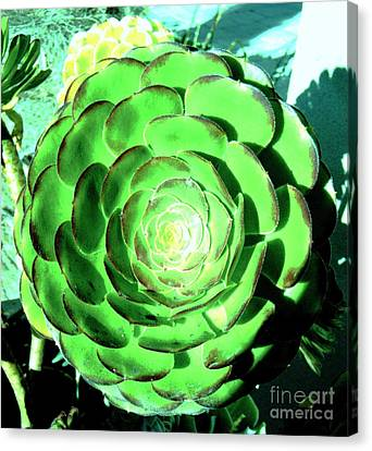 Flower Pattern Of Life Canvas Print