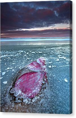 Flower Pedals At Sandpoint Beach Canvas Print