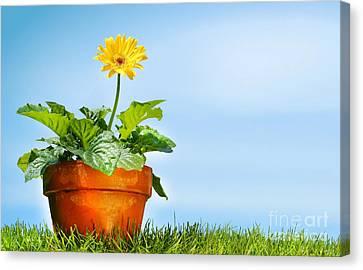 Flower Pot On The Grass Canvas Print by Sandra Cunningham