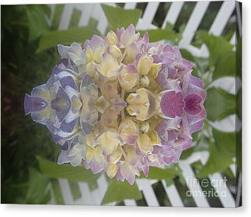 Flower Power Canvas Print by Christina Verdgeline
