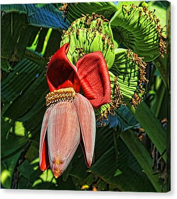 Flower Power Canvas Print by HH Photography of Florida