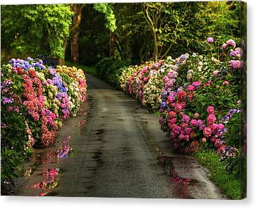 Flower Road Canvas Print by Svetlana Sewell