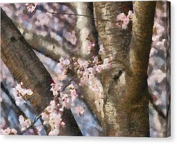 Personalized Canvas Print - Flower - Sakura - Spring Blossom by Mike Savad