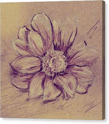 Canvas Print featuring the drawing Flower Sketch  by Kara Evelyn-McNeil